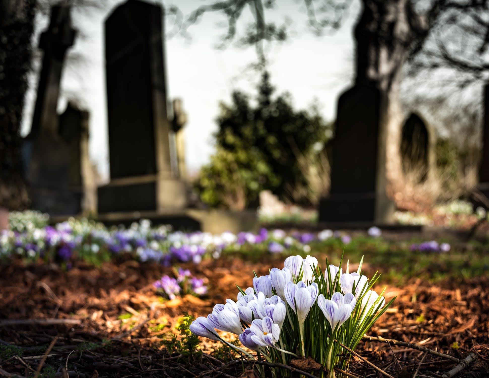 Local St. Louis Cemeteries